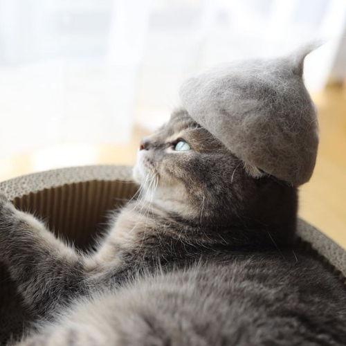 貓咪戴用自己的掉毛所製成的帽子