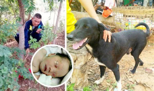 黑狗「乒乓」及獲救的男嬰