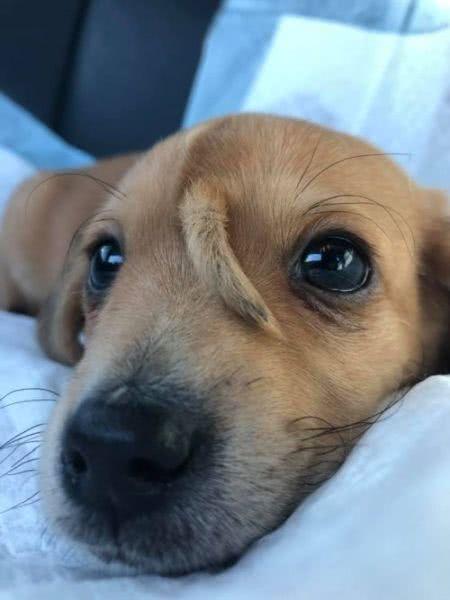 這隻小狗臉上多長了一條尾巴