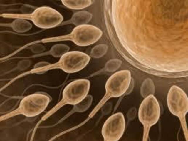 semen-e-esperma-fecundando-o-ovulo