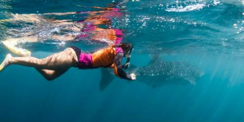 Swimming Along Side a Whale Shark!