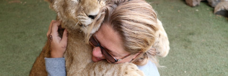 Best Day Ever: Lion and Safari Park