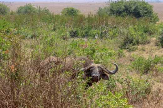 Nairobi national Park Kenya