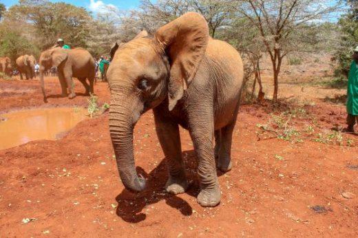 The David Sheldrick Wildlife Trust, Nairobi Kenya