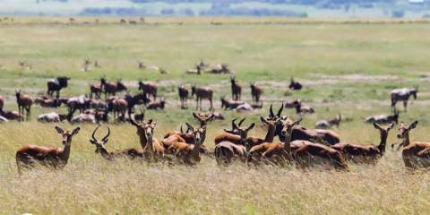 Hyderabad to Masai Mara: How to plan your Kenya safari from India