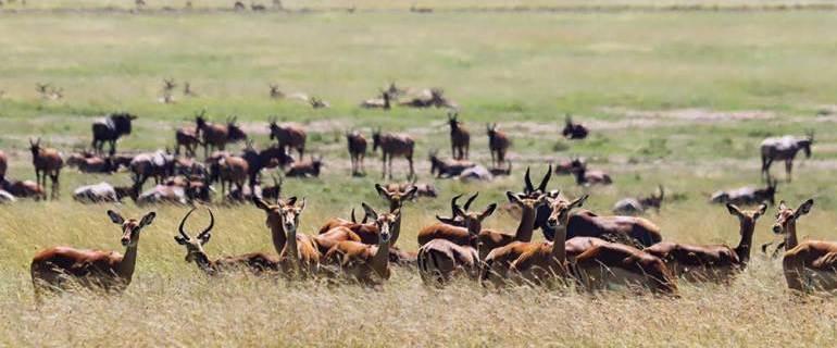 Hyderabad to Masai Mara: How to plan your Kenya safari from India