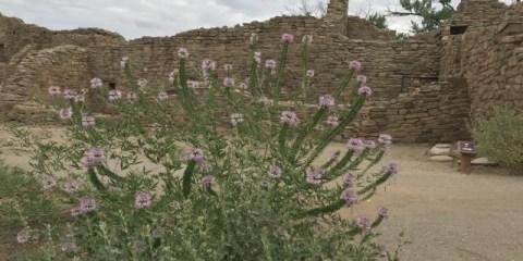 Aztec Ruins – Vestiges of an Ancestral Pueblo Society