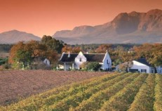 cape-winelands-tour