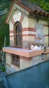 chat à l'oratoire