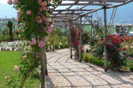 5il-giardino-della-rosa-di-ronzone_archiviograndigiardiniitaliani_b