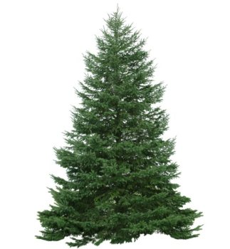 Abete-albero-di-natale.jpg