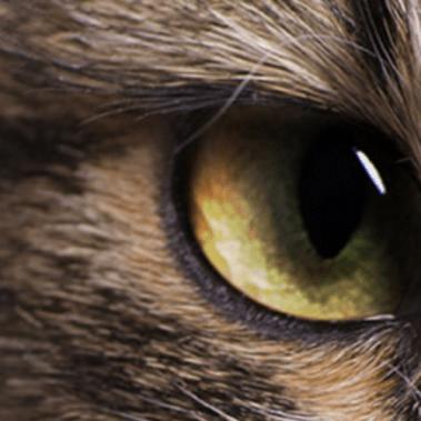 super-cat-show-2016-roma.png