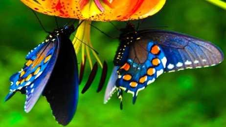 farfalle-2.jpg