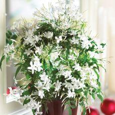 le-5-migliori-piante-da-tenere-in-camera-da-letto_NG4