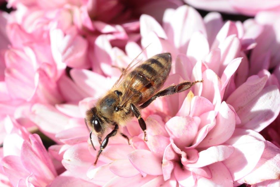 bee-macro-flower-blossom-64007