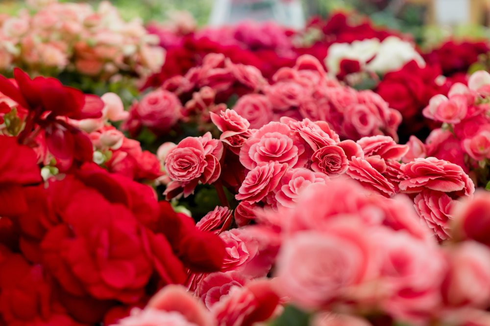 fiori 4.jpg