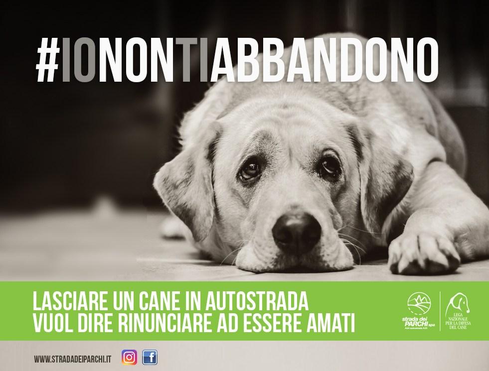 campagna-abbandono_cani