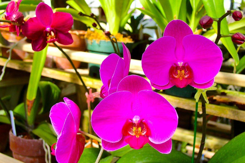 beautiful-bloom-blooming-669246.jpg