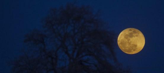 l_-martedi-potremo-vedere-la-superluna-piu-grande-dell-anno-fyms.jpg