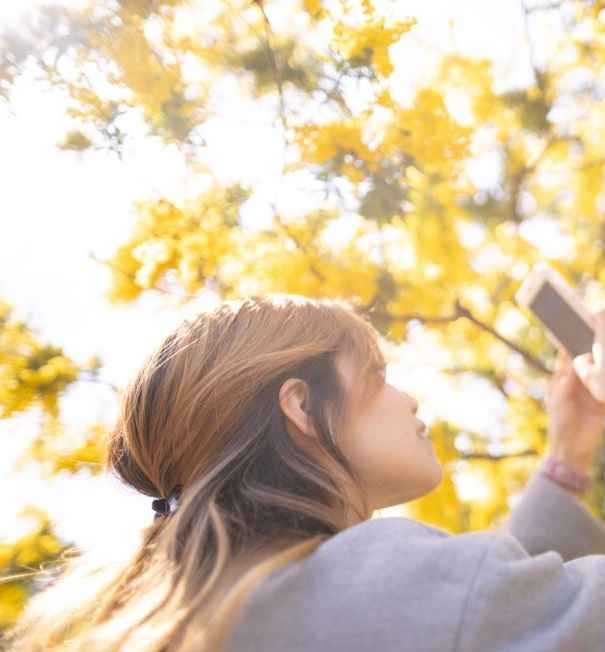 Young Hispanic woman taking picture of Mimosa blossoms using smart phone