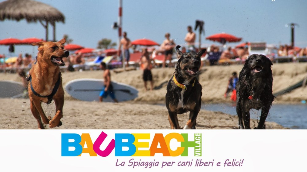 baubeach-tv_banner2