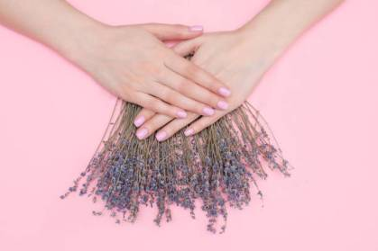 pink manicure on beautiful women's hands. Sprigs of lavender