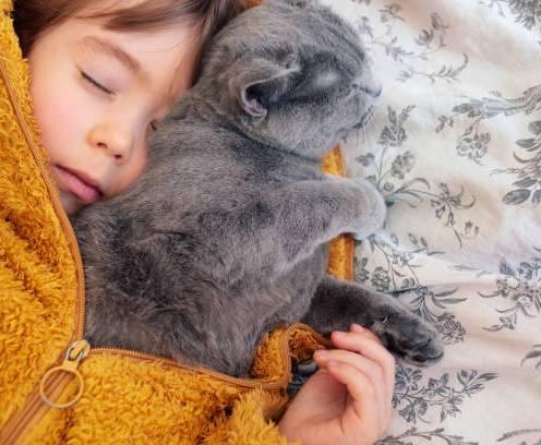 Sleeping little child with his kitten.