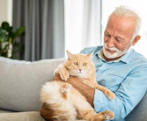 Close-up of happy senior man petting his domestic cat.