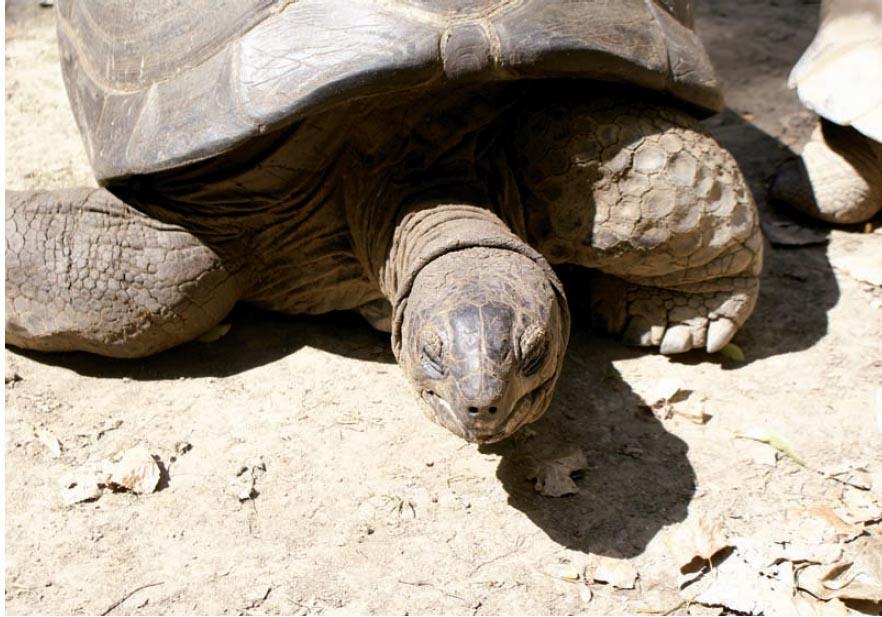 Overexposed Turtle