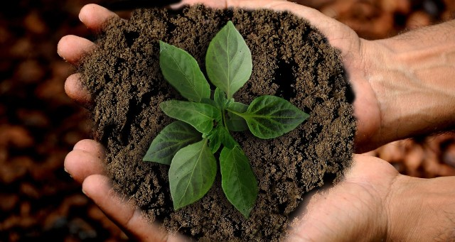 Hands cupped together holding soil and a plant
