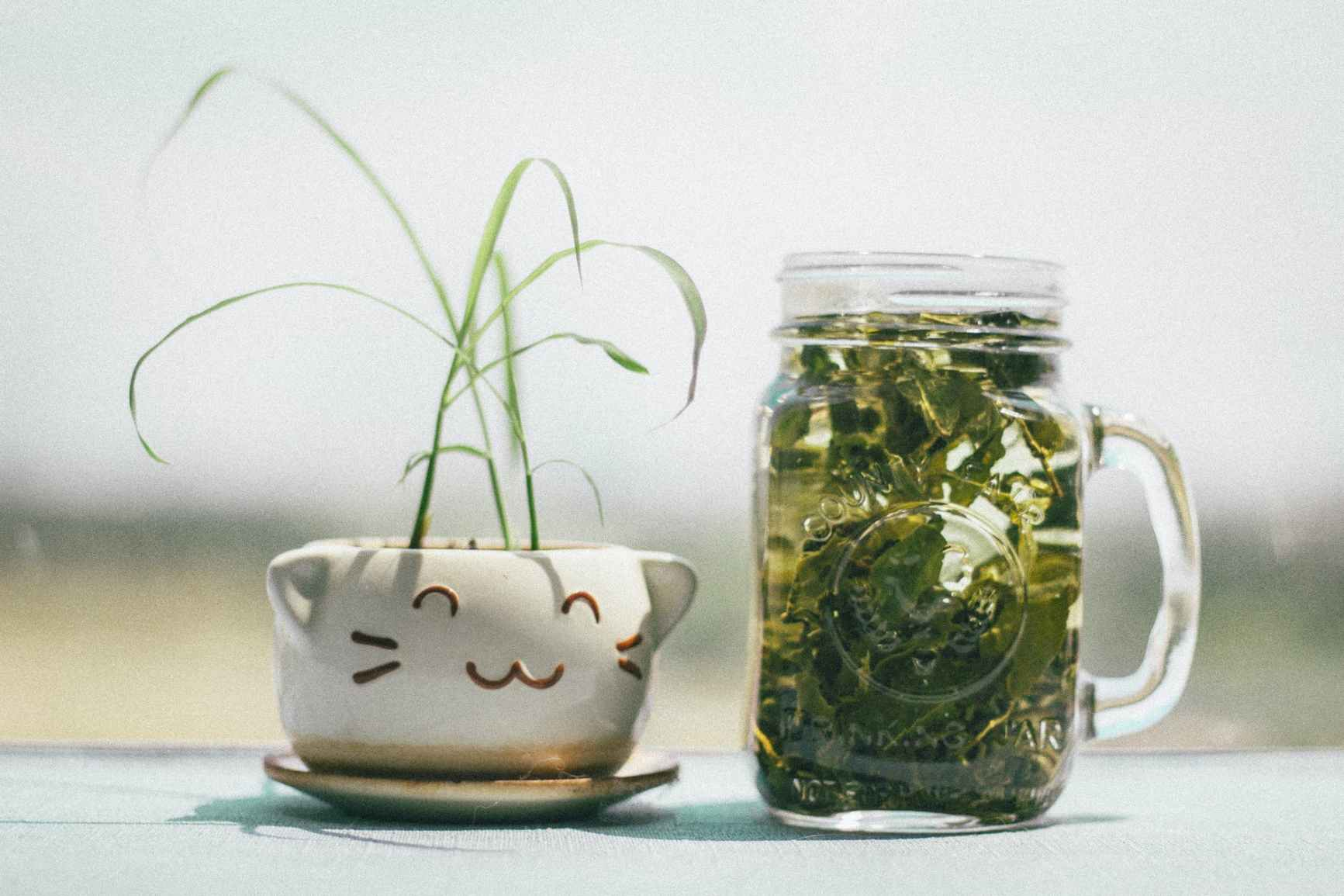 green leafed plant beside clear glass mg
