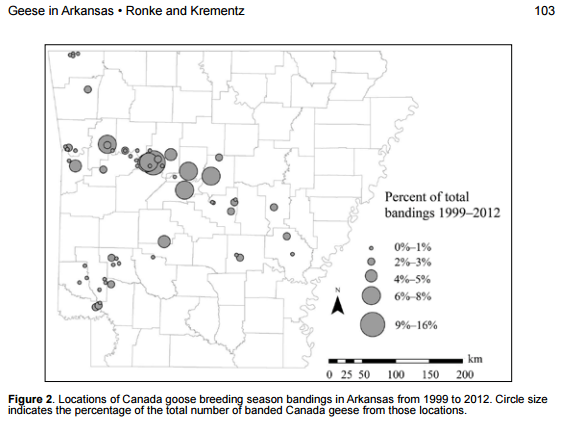 image of Canada geese distribution in Arkansas. There are big blobs all along I-40 corridor, including several in Pope County