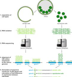 overview of our rna seq analysis  [ 925 x 1024 Pixel ]