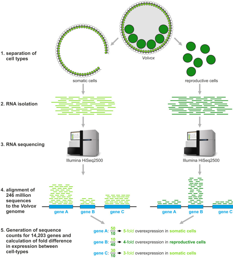 hight resolution of overview of our rna seq analysis