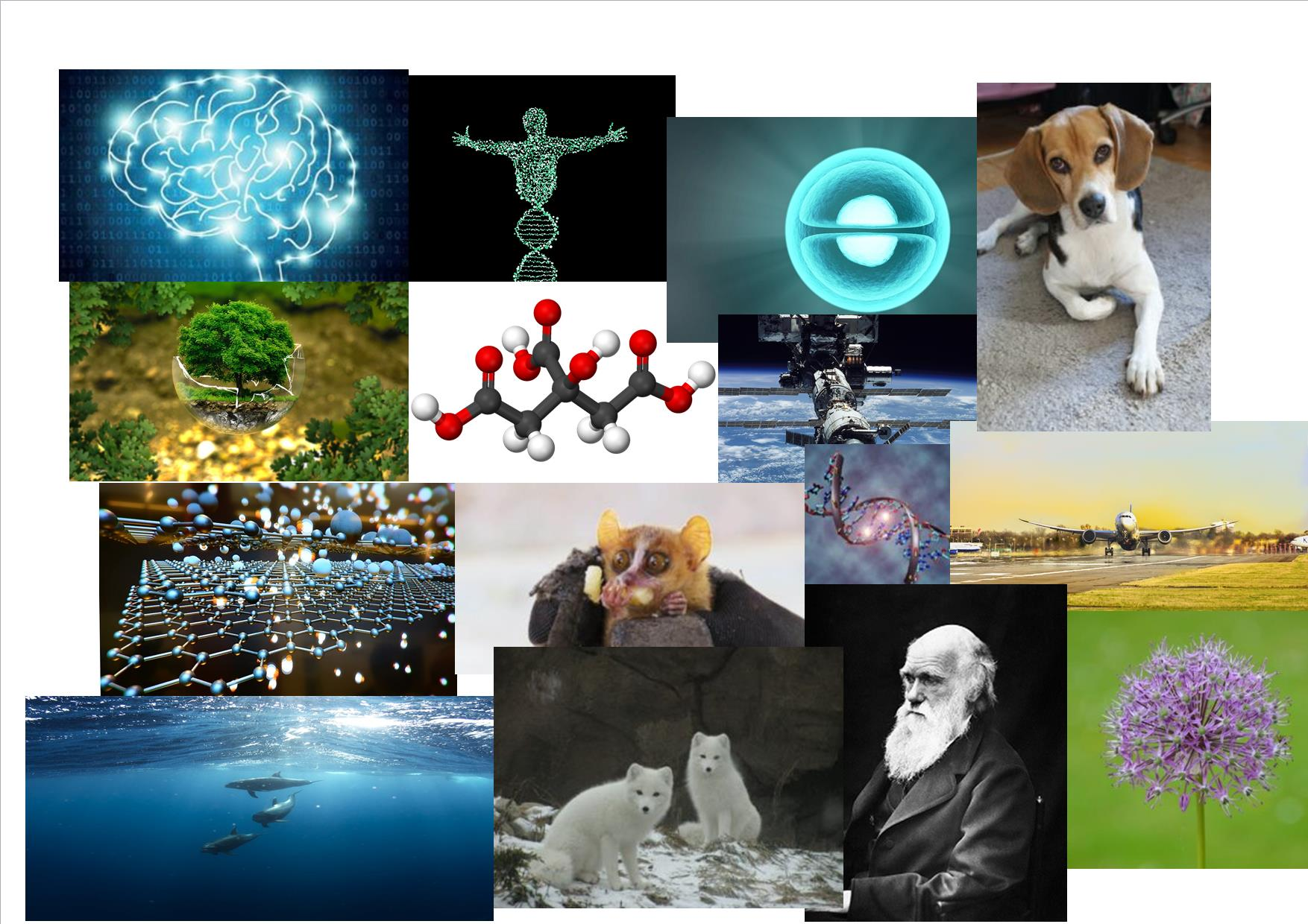 Quiz: so you think you know biology? - On Biology