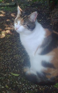 tilly_cat