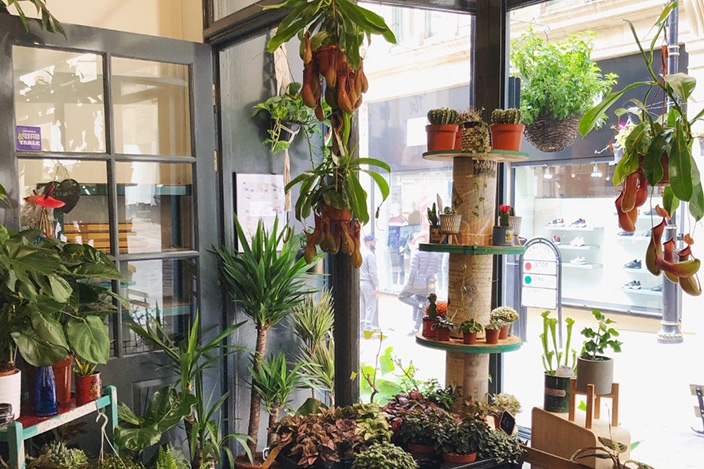 The interior of a shop with lots of greenery inside of it.