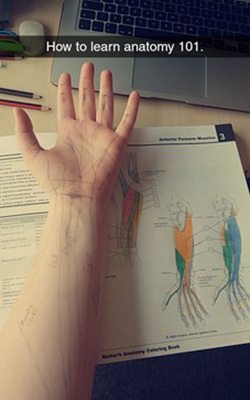 Saffron's arm with pen marks on it showing different parts of its anatomy.