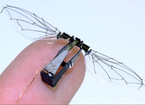 https://i0.wp.com/blogs.bu.edu/bioaerial2012/files/2012/10/Woods-Robot-Fly.jpg