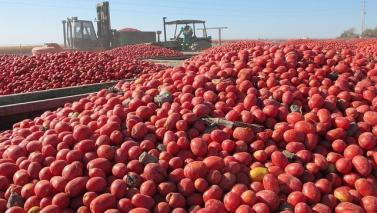 tomate-lebrija-empleo--644x362