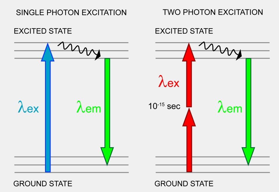 2 Photon Excitation Jablonski Diagram Neurocircuits Lab