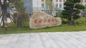 A picture of a sign announcing you are at the School of Life Sciences. The sign is painted upon a large flattened rock with manicured trees on either side.