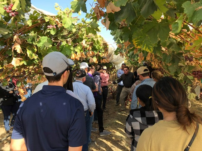 Farm tour guide speaking to attendees beneath grape vines in the field.