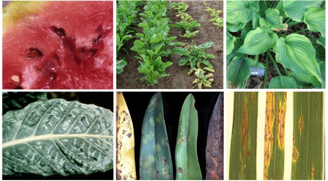 Plant Pathogens