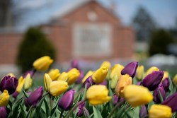 Yellow and violet flowers near the Cedarville entrance sign