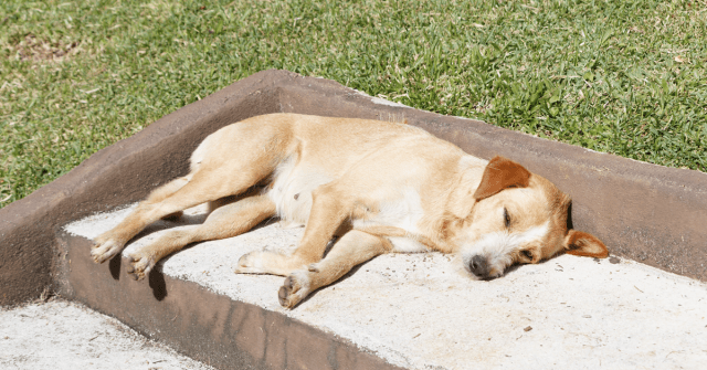 The C-Suite Speaks: Dog Days of Summer