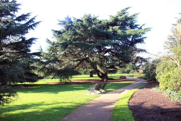 Sculptural trees in the formal Flower Garden