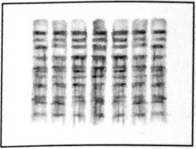 SDS-PAGE gel trouble shooting : Collins Lab Blog Life in