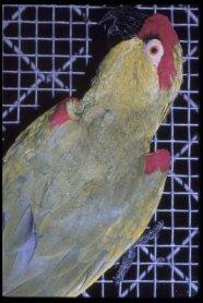 thickbill parrot (Rhynchopsitta pachyrhyncha)
