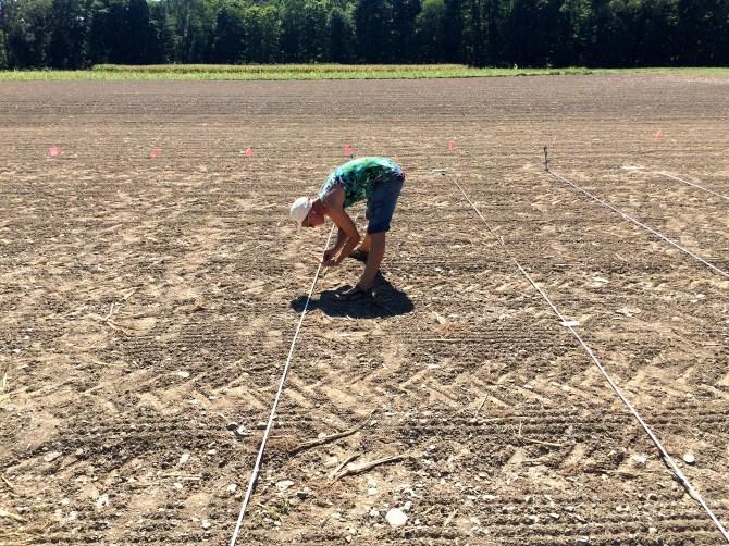 Planting 2,496 vetch seeds
